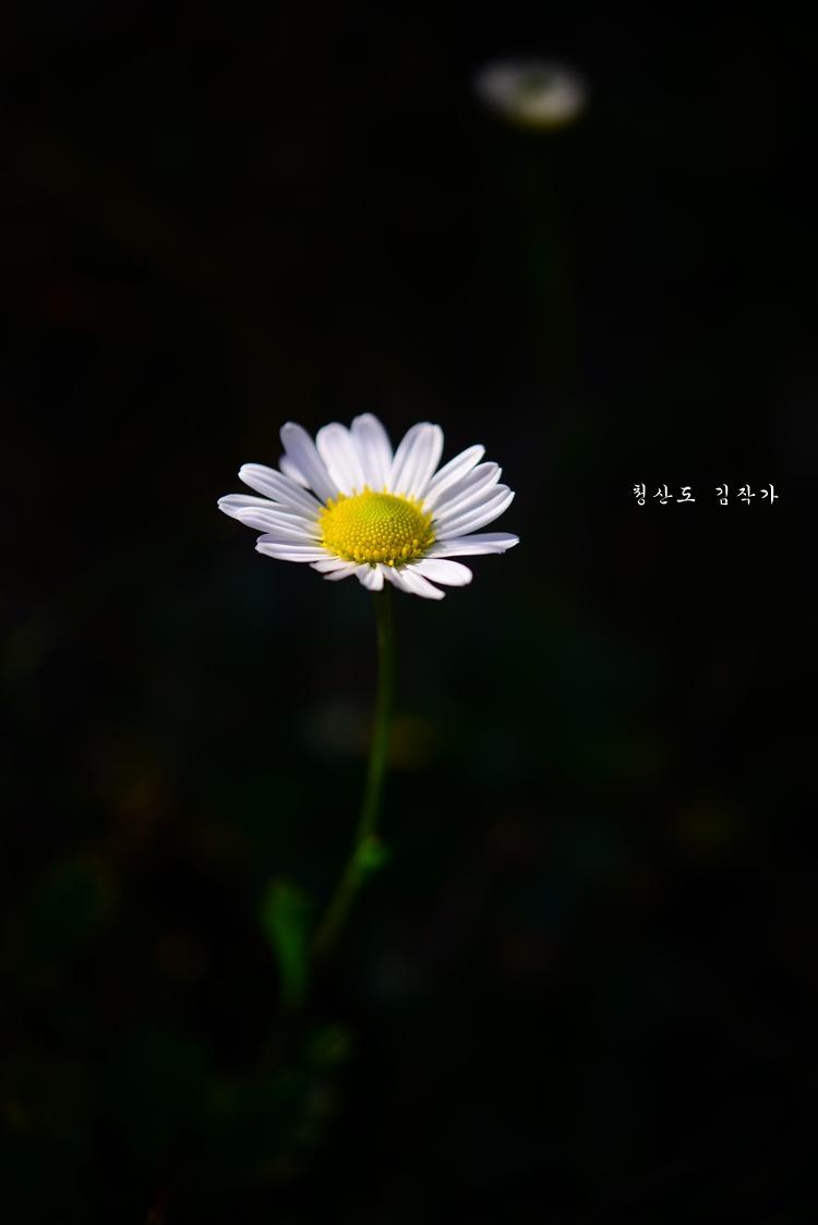 13DSC_4915.JPG
